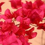 Fleurs sur terrasse