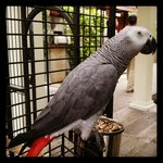 Playful parrot which will cheer your day :)
