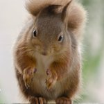 This squirrel seems to be showing me how big a piece of cake he wants ;)