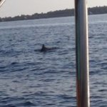 A playful dolphine along side of our boat, Feb 16, 2014