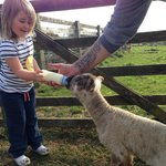 Feeding a lamb! Made her day