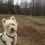 My pooch, Archie at the entrance to all the hiking paths.