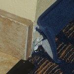 Damage to carpet & walls