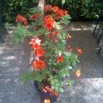les plantes s'y plaisent et florissent à foison