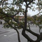 Trees at Highland Park Village