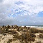 Praia do Barril Tavira