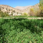 Growing crops in the Mgoun Valley with Sahara Atlas Tours.