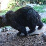 Αρκούδα αποφυλακισμένη, δυστυχώς είχε ψυχολογικά