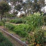 dal zotto vegetable garden
