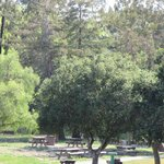 Ed Levin County Park (Picnic Areas) Milpitas, CA