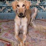 Kristiania Dog