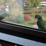 Parokeet sitting on our window ledge