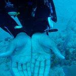 underwater spider found by Analdo