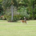 promenade de grand chien !