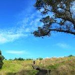 Walk up to the summit of Mt Eden