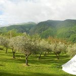 Waking up in the olive grove with a specatacular view of the mountains.