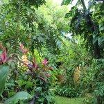 Foto de Zimbo Tropical