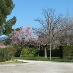 Campingplatz mit blühenden Bäumen