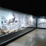 Animal excavations