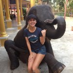 The 5 year old elephant for photos