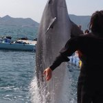 Os golfinhos são lindos