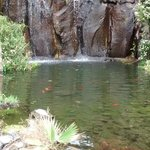 Pond and waterfall in Hotel grounds