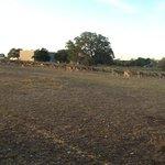Deer & more deer