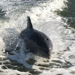 Dolphins having fun!