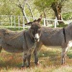 Les ânes du Domaine de Varenne
