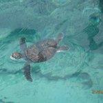 turtle nursery