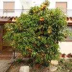 Leckere Orangen vor dem Haupthaus