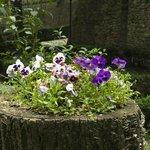 dettaglio floreale, nella parta bassa dei giardini
