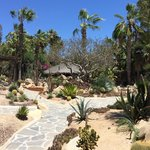 cactus cout yard