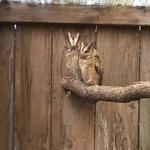 owl centre