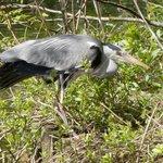 Heron in Vondelpark