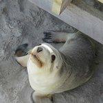 Under the walkway at Seal Bay