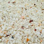 beach details with plenty of shells