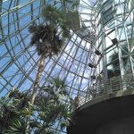 Palm and cycad pavilion - gorgeous!