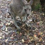 Walk through kangaroo haven