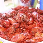 crawfish on a sunny day