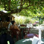 dining under the Almond Tree