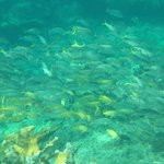 Live Reef lots of fish beautiful colors!
