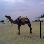 camel ride available on beach