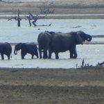 jede Menge Elefanten