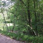 Sentiero del giardino