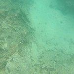 Remains of corals at Blue Bay