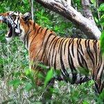 Tiger Spotting at Ranthambhore
