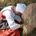 Sheep Milking Demonstration