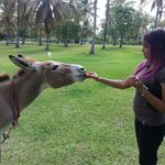 One of the friendly donkeys @ the hotel