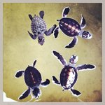 one day turtles